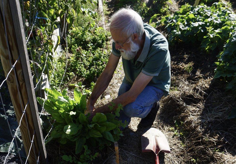 Stephen Barstow er alltid på jakt - etter nye varianter av spiselige vekster.