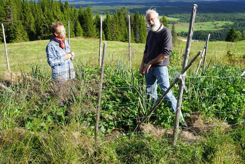 Eirik Lillebøe Wiken og Stephen Barstow fra KVANN, inspiserer hvitløk i potetåkeren 940 moh i Valdres