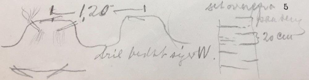 """Blant notatene i boka fant vi denne tegningen. Her har tydeligvis læreren presentert en alternativ måte å legge opp dyrkingen. Røttene er plassert mot midten i en drill, slik at bladene vokser ut på sidene. Samtidig skriver eleven noe om beste himmelretning på drillene - sannsynligvis for å få mest mulig sol inn i radene: """"Dril bedst syd W"""""""