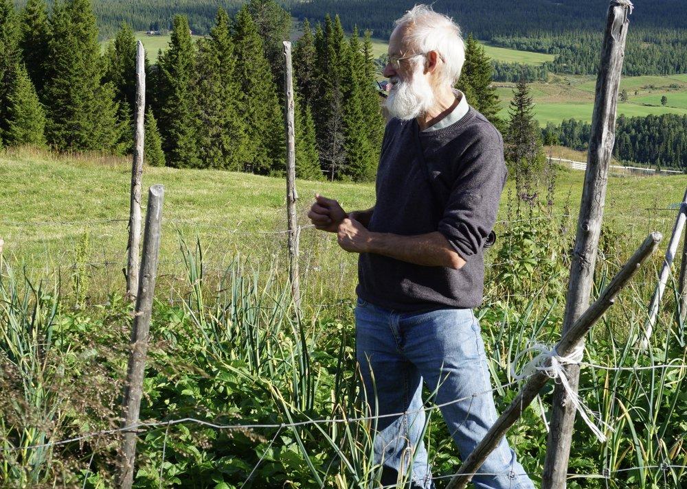 Stephen Barstow er på en ustanselig jakt etter nyttevekster som viser seg egnet for ulike klimasoner. Her fra hvitløksfelt 940 moh i Valdres
