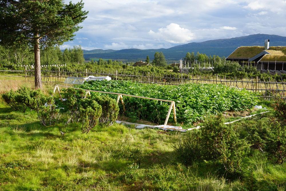Innrammet av vakker fjellheim, tømmerhytter, kjerringris og brisk vokser potet og grønnsaker frodig i hyttehagen til Johan Fredrik.