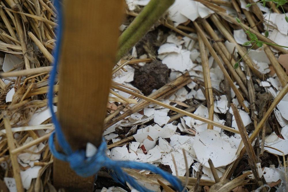 Jorden er en frodig blanding av hagens jord, kompost, møkk, eggeskall og gressdekke.