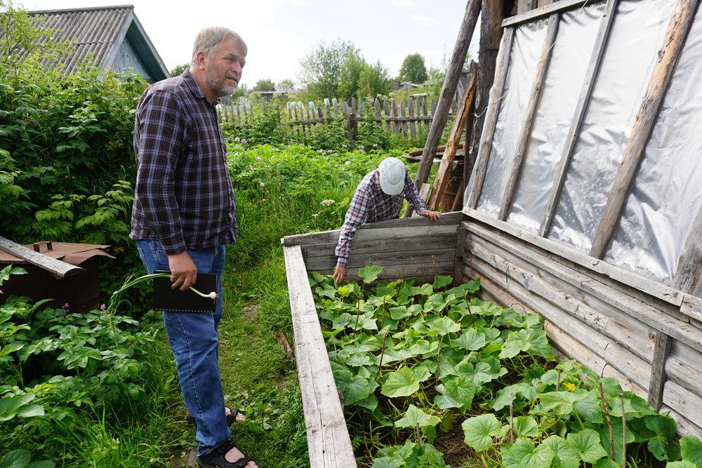 Den gamle mannen ved elven Dvina litt nord for Arkhangelsk, har bygget seg en enkel drivbenk til sine agurker.