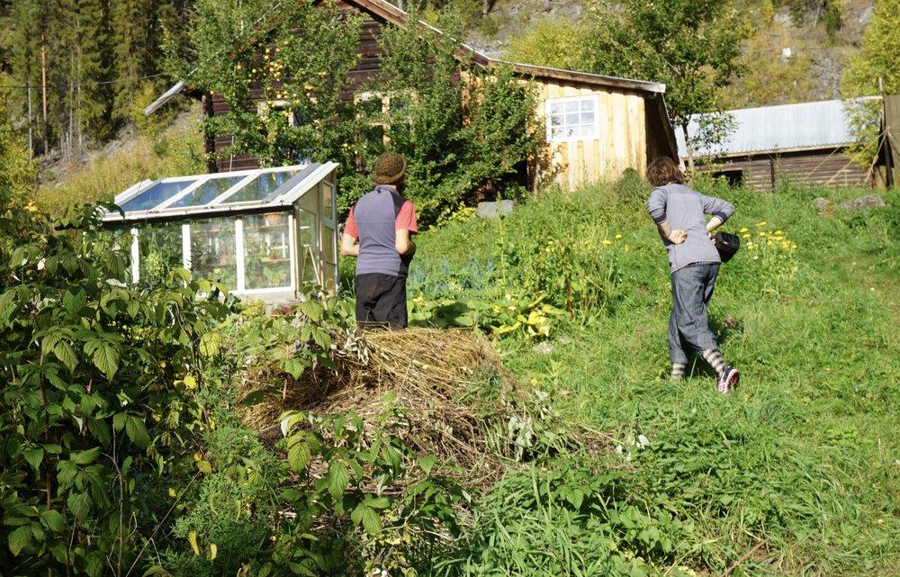 Tyske studenter på sommerferie i Norge. På småbruket de låner har de satt opp et enkelt veksthus av noen ledige vinduer.