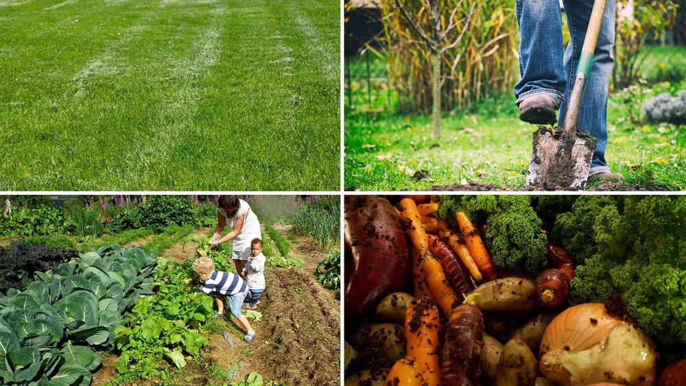 Veien fra plen til grønnsaker er arbeidssom, men gir mye glede underveis, og til slutt viktige bidrag til menyen.