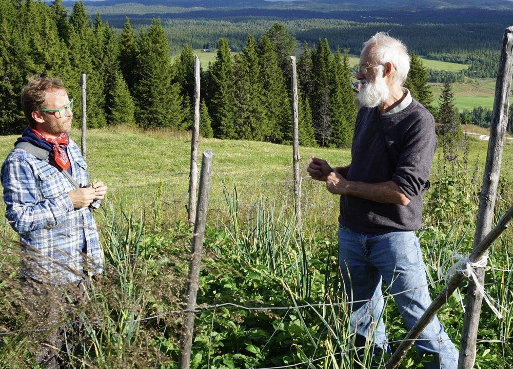 Eirik Lillebøe Wiken (fra venstre) og Stephen Barstow på befaring i hvitløksfeltet på stølen i Valdres
