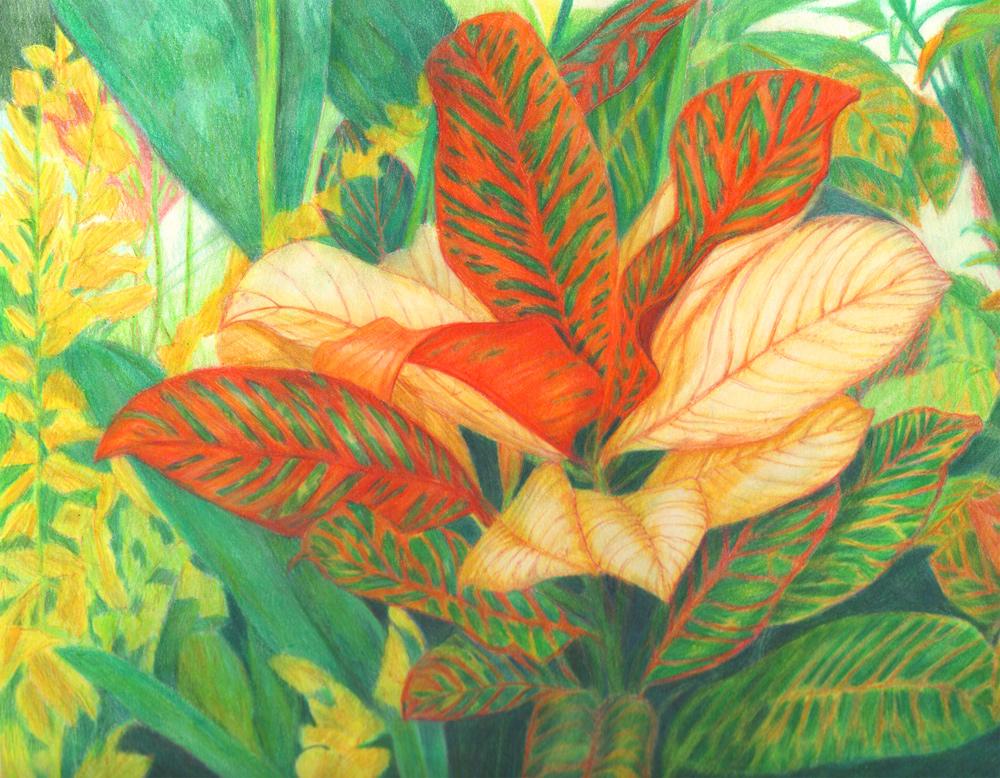 Crotons 1