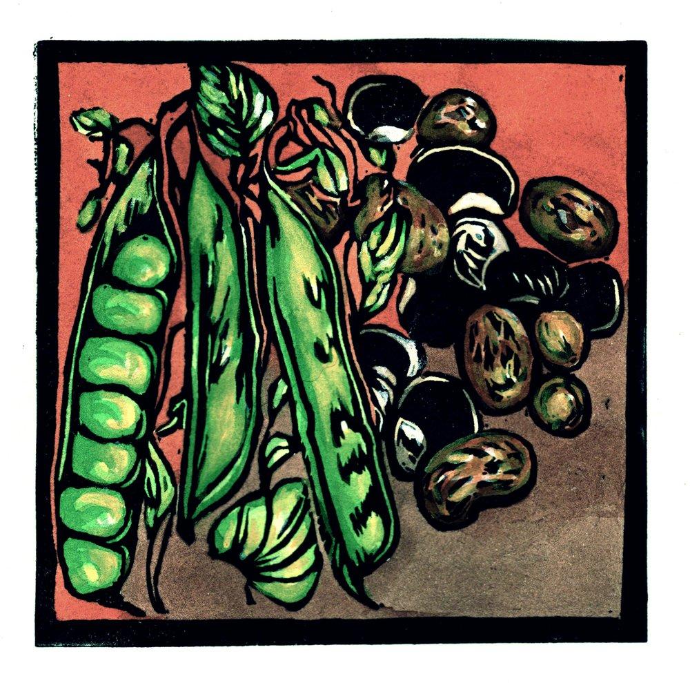 Beans-red-back-digi-web.jpg