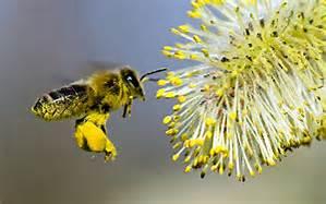 pollenbeebasket.jpg