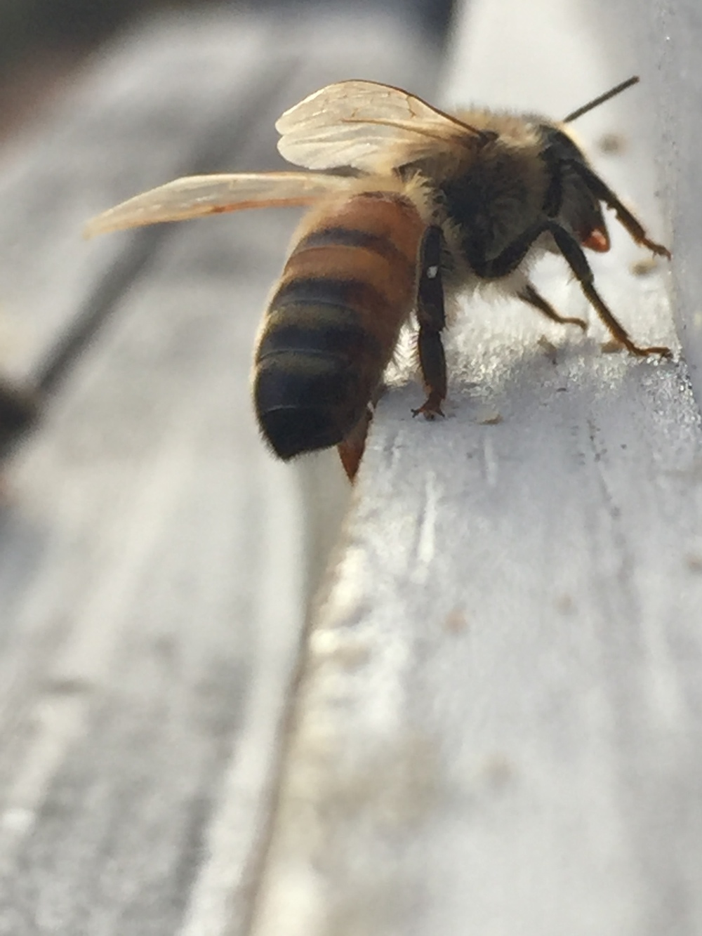 Bee Kids (4).JPG
