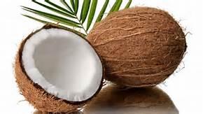 coconutplant.jpg