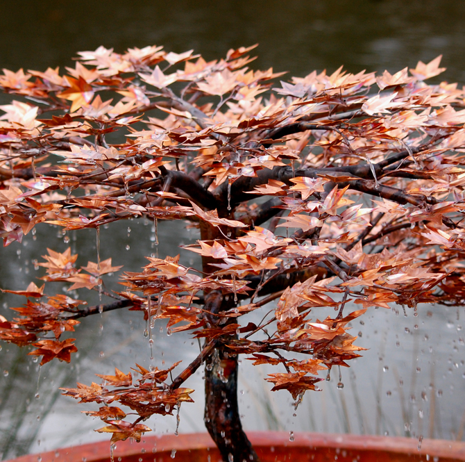 japanese-maple-close-copper-tree-water-feature-malibu-fountains.jpg