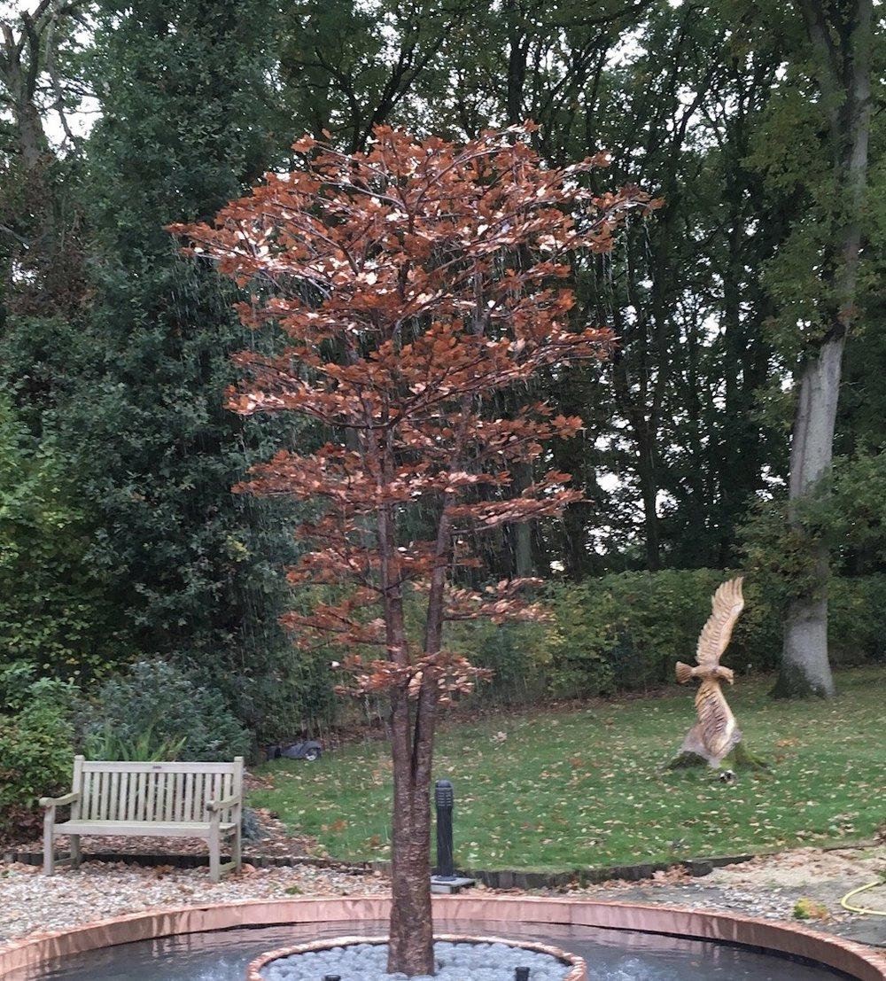 Giant Maple.jpg