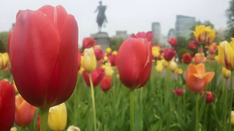The Public Garden is full of Beautiful flowers... and some guy on a horse