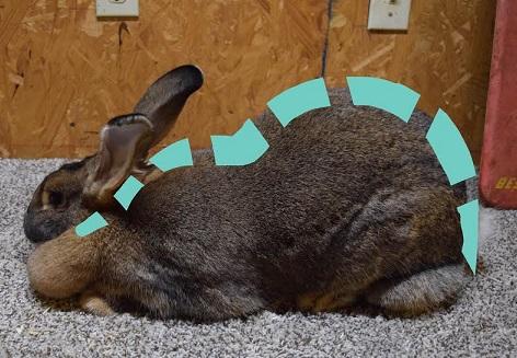 rabbit show table brokeasshome com