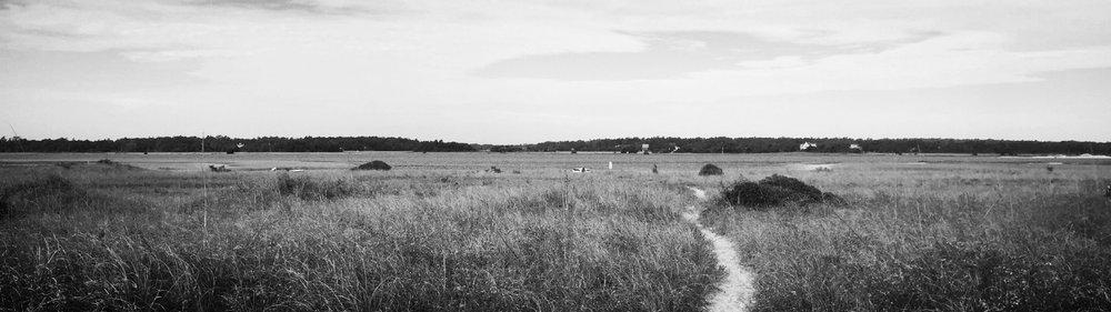 Masonboro Path.jpg