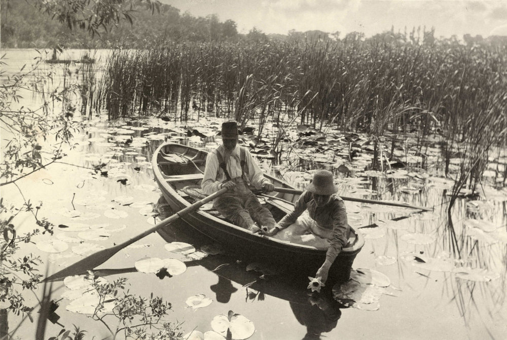 Peter Henry Emerson's 'Gathering Water Lilies' (1885) PHOTO: COLLECTION OF MICHAEL MATTIS AND JUDY HOCHBERG