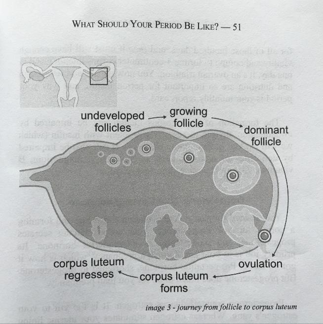 Diagram from Period Repair Manual (1st Edition)