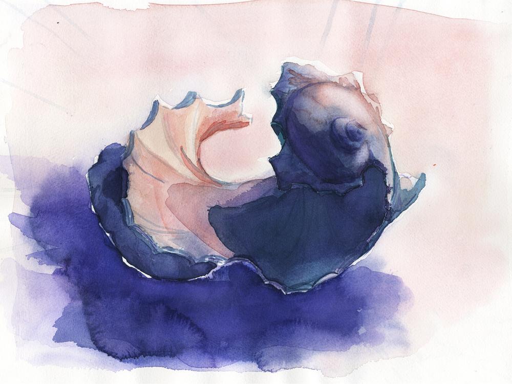 shell 6.jpg