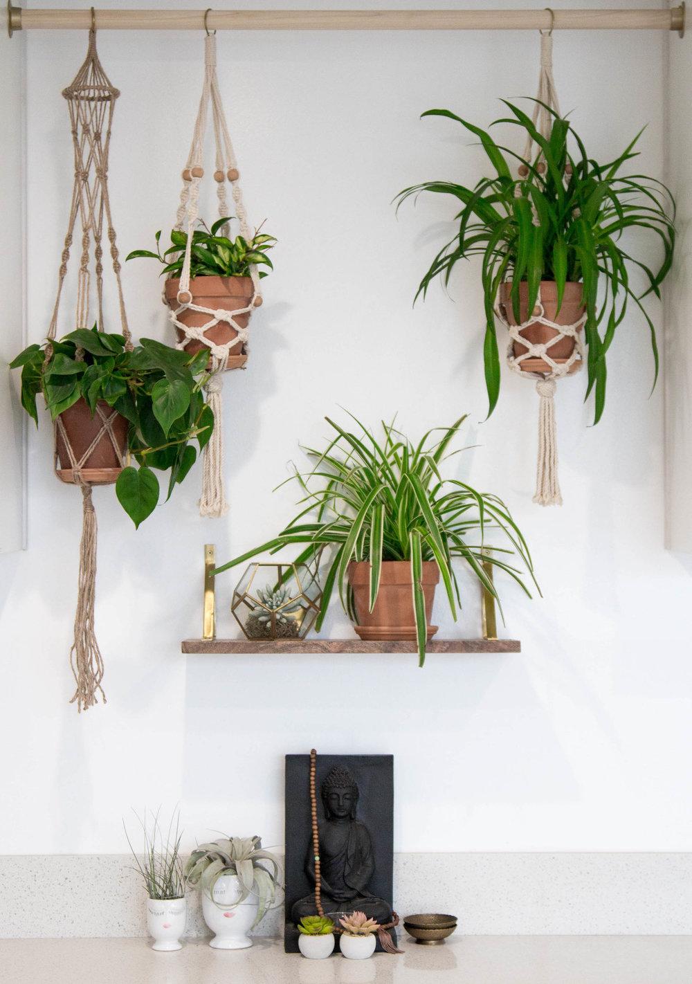 the-cosmo-studio-dolkii-plant-styling-shaiyanne-dar-5.jpg