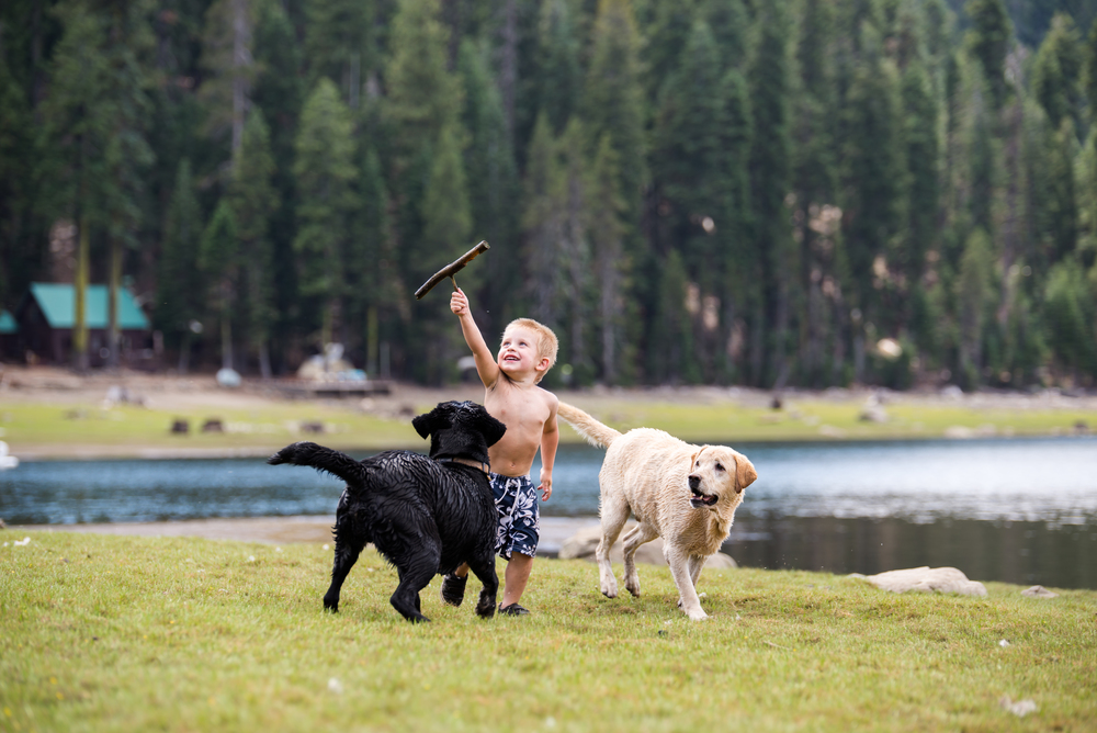 My son playing with our dogs at the lake.