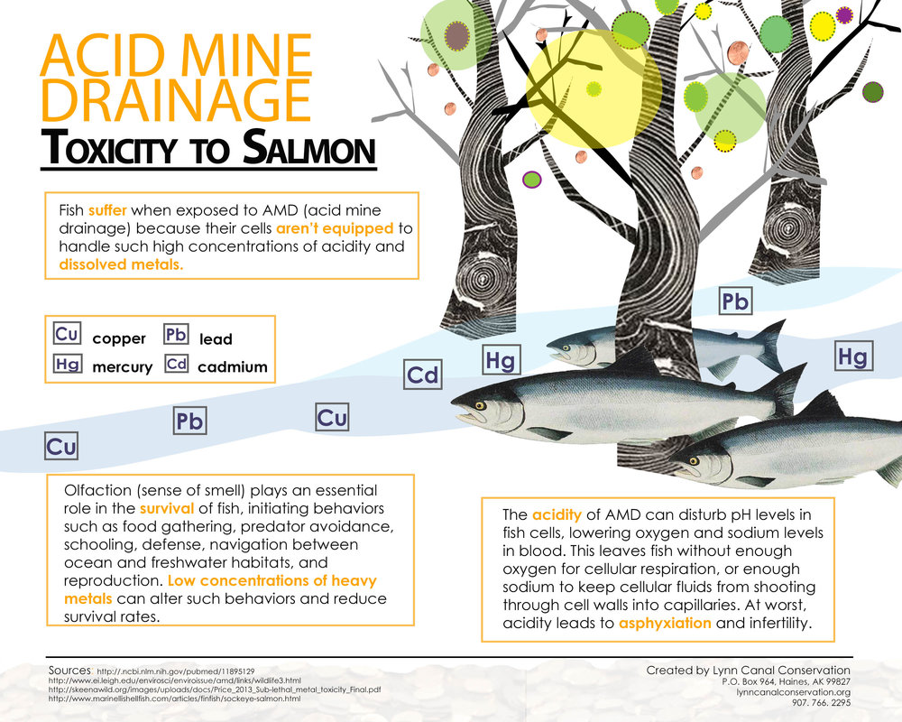 AMD and salmon (2).jpg