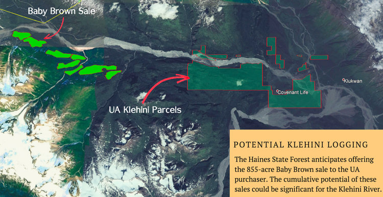 Forestry — Lynn Canal Conservation