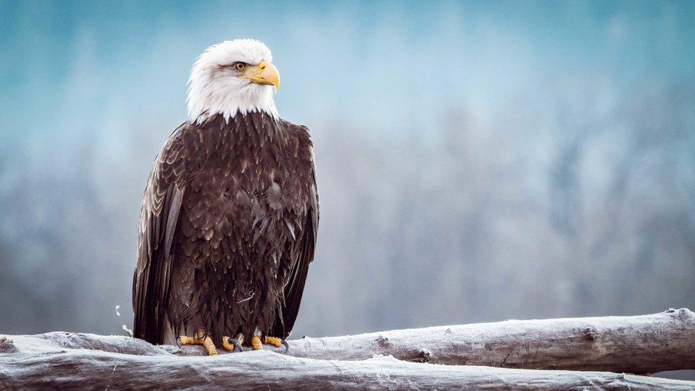 eagle.demo2.jpg