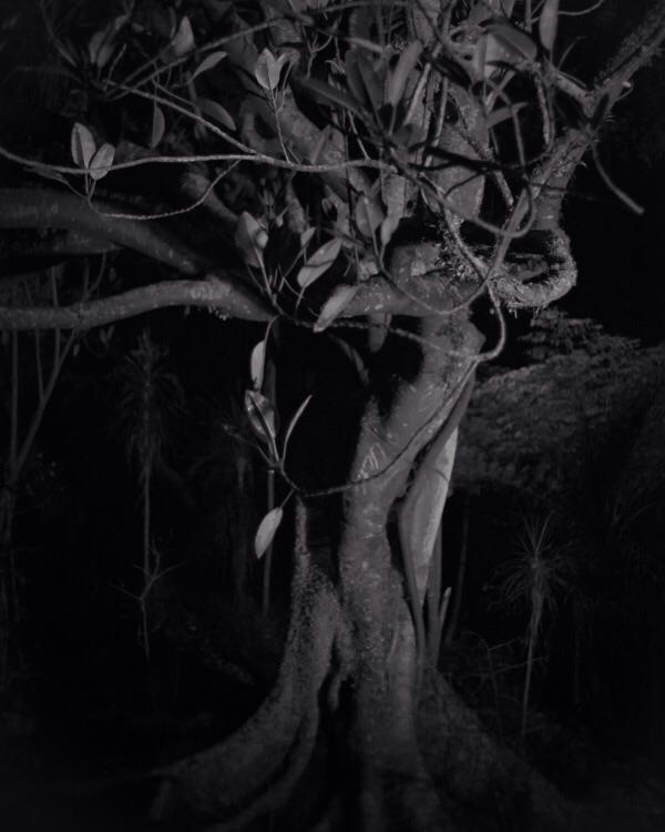 Shade Tree I