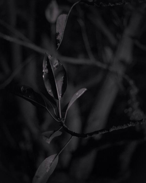 Shade Tree III