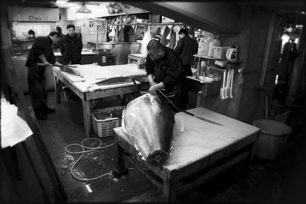 Tuna Auctions, Tsukiji Market