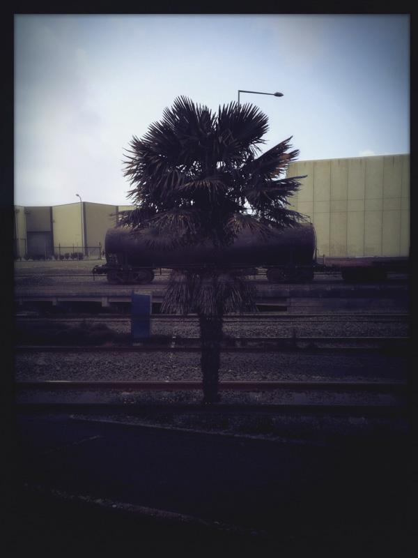 Palm Wind