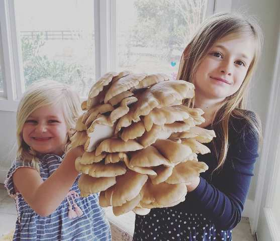Local Green Mountain Oyster Mushroom