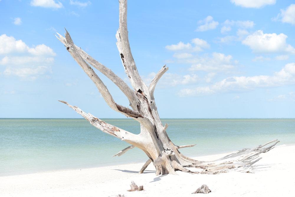 Fort Myers 01.JPG