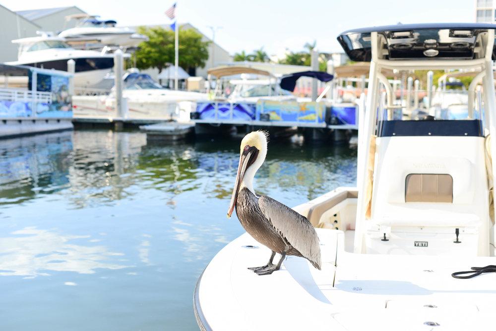 Fort Myers 10.jpg