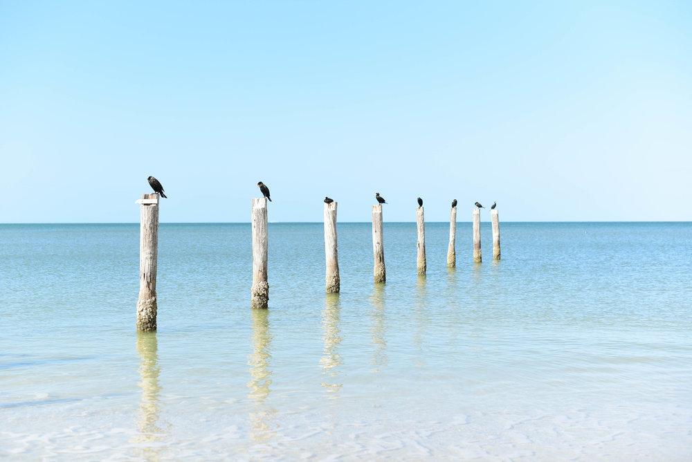 Fort Myers 12.jpg
