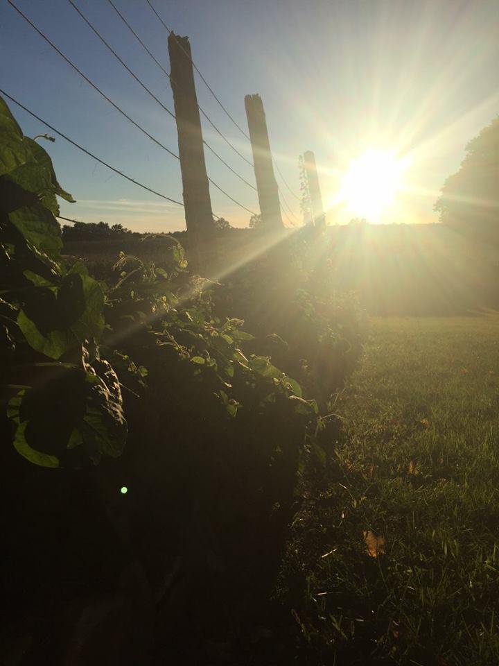 thyme farm.jpg