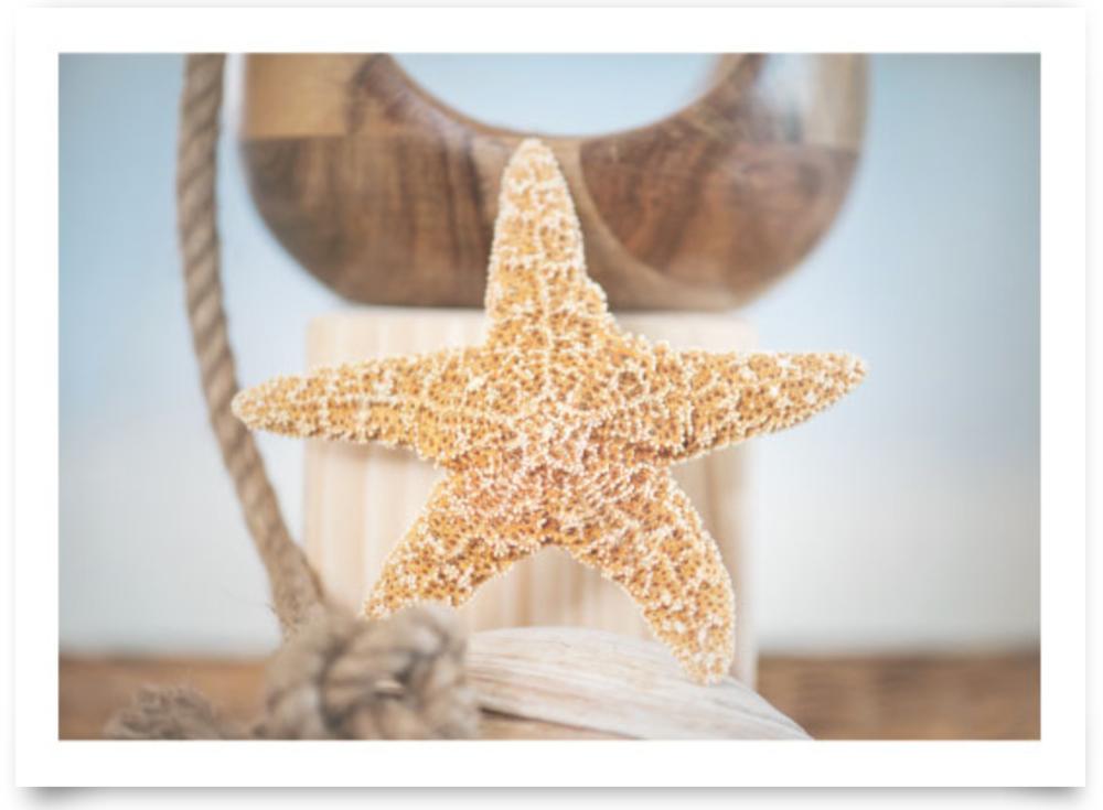 Nautical Starfish