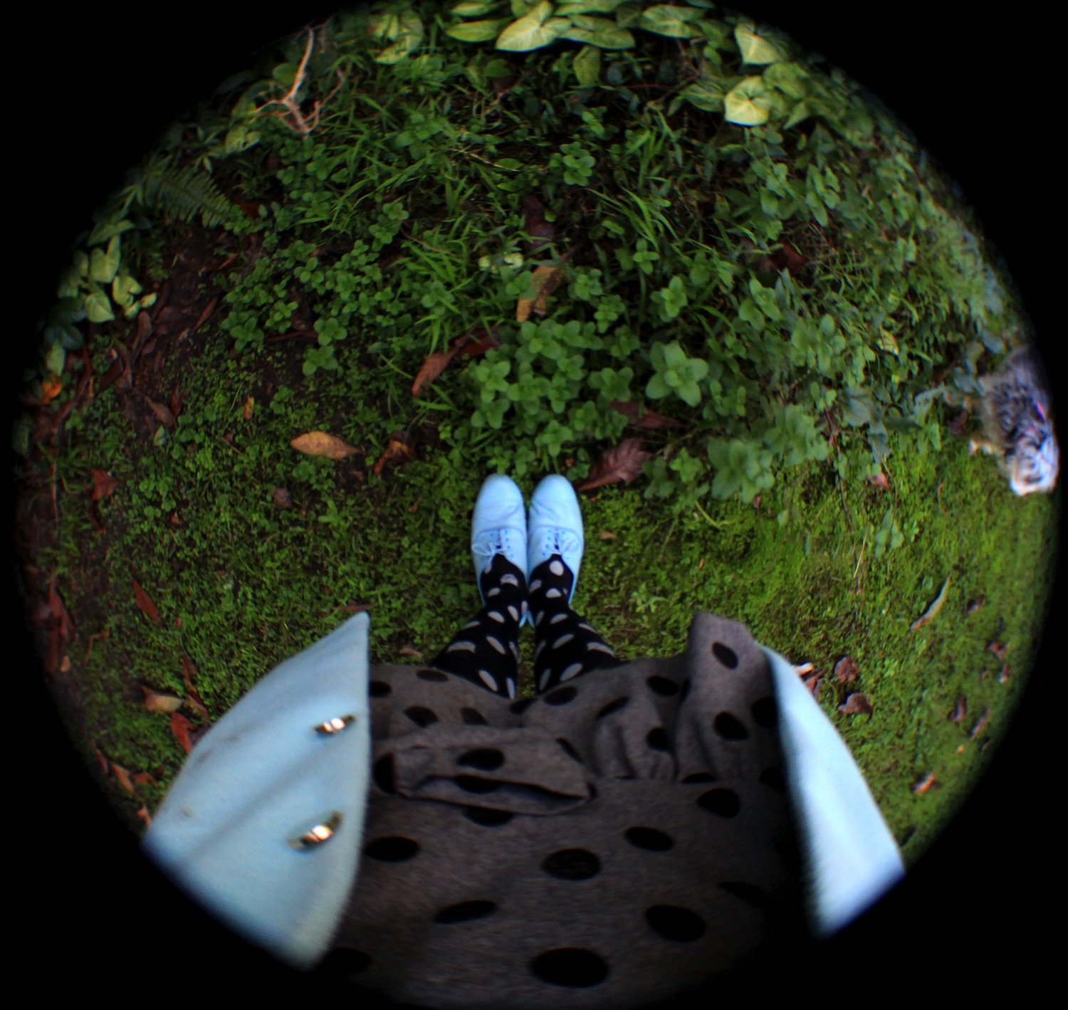 Polka Dots Tiny Dogs And Fish Eye Lenses The Emerald Ruby Lens Fisheye Shoes