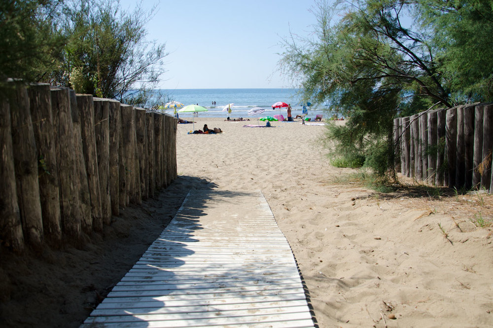 beach_path_DSC_5660_web.jpg