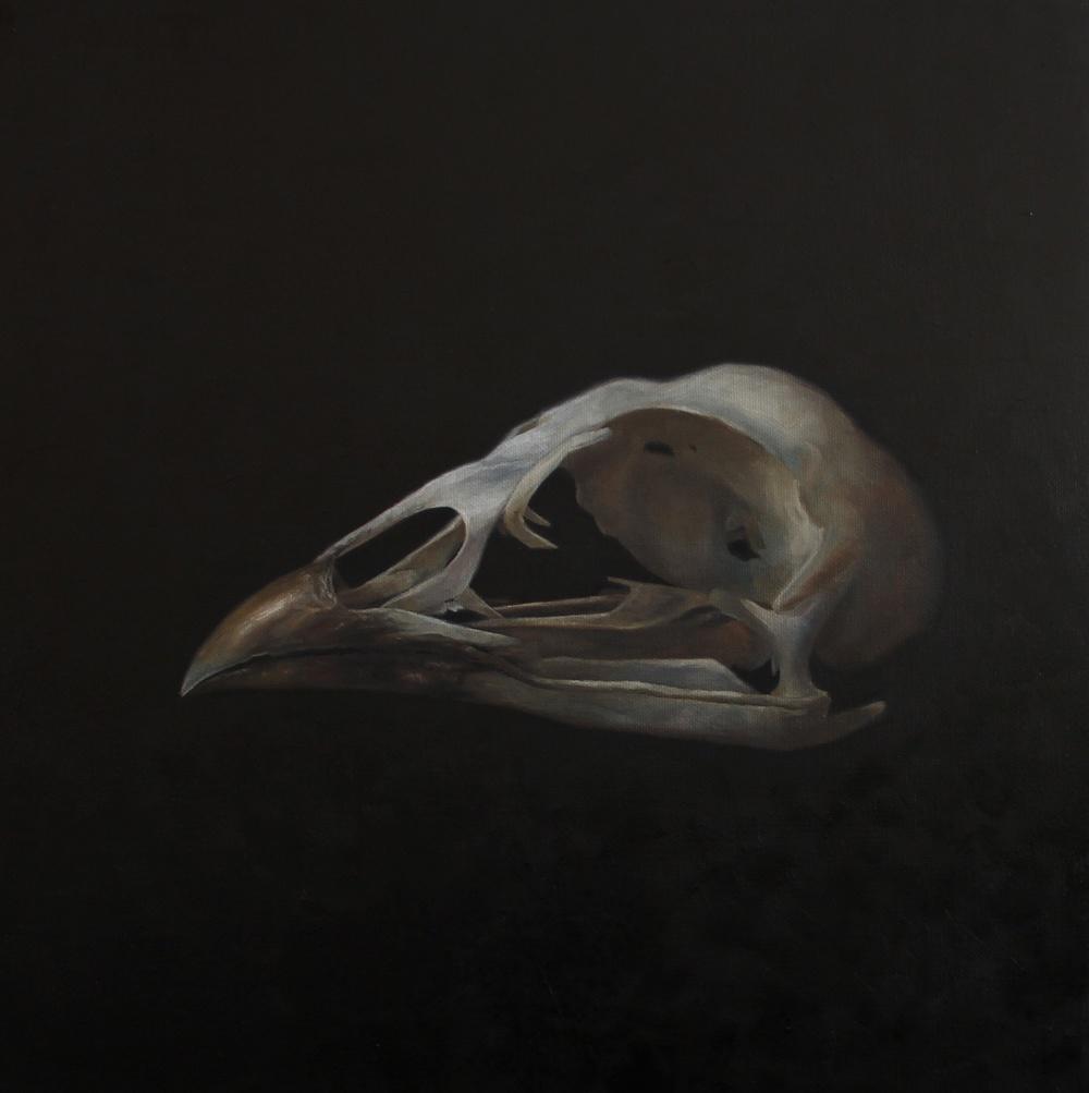 Bird Skull 1