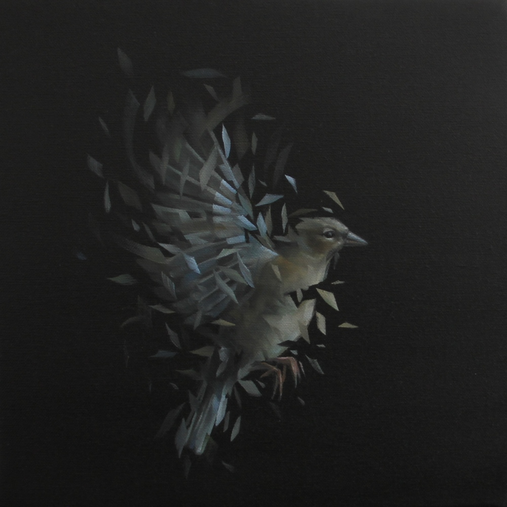 Bird Study 40