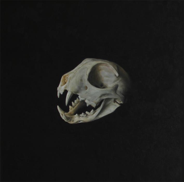 Skull Study III
