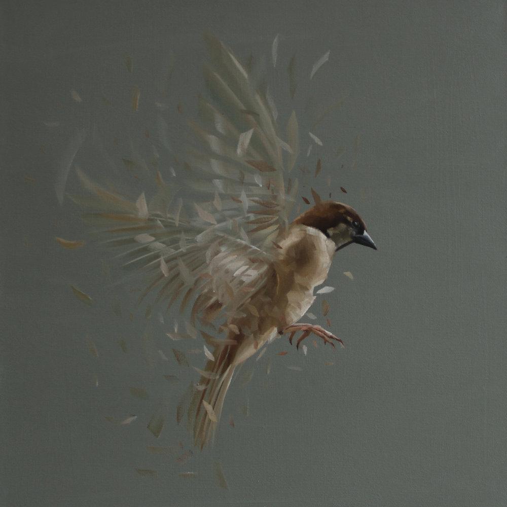 Bird Study No.69