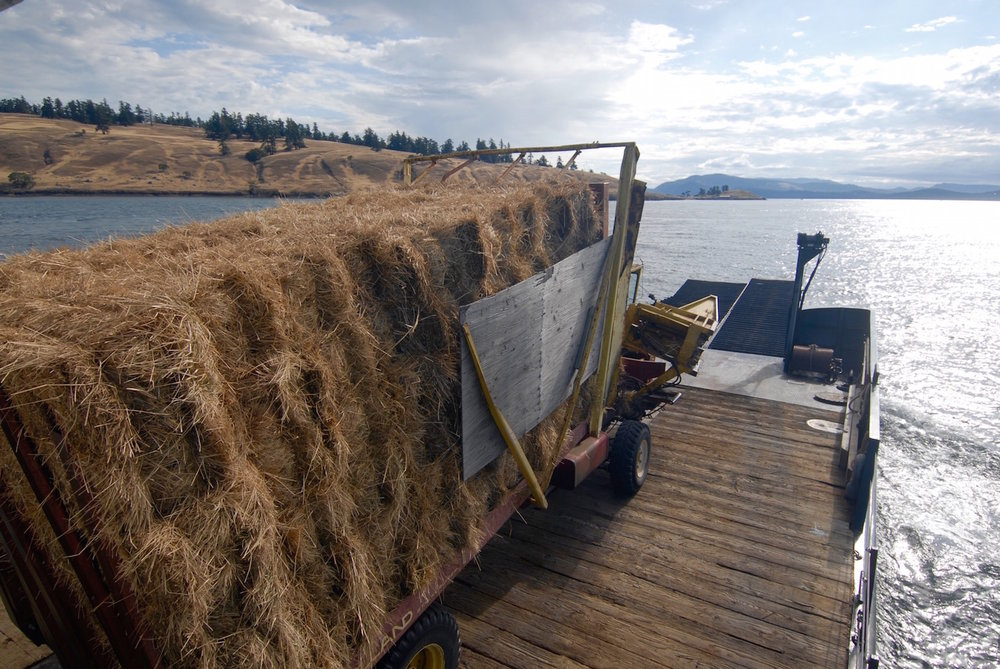 Hauling an oversize trailer of hay bales from Roche Harbor to Spiden Island