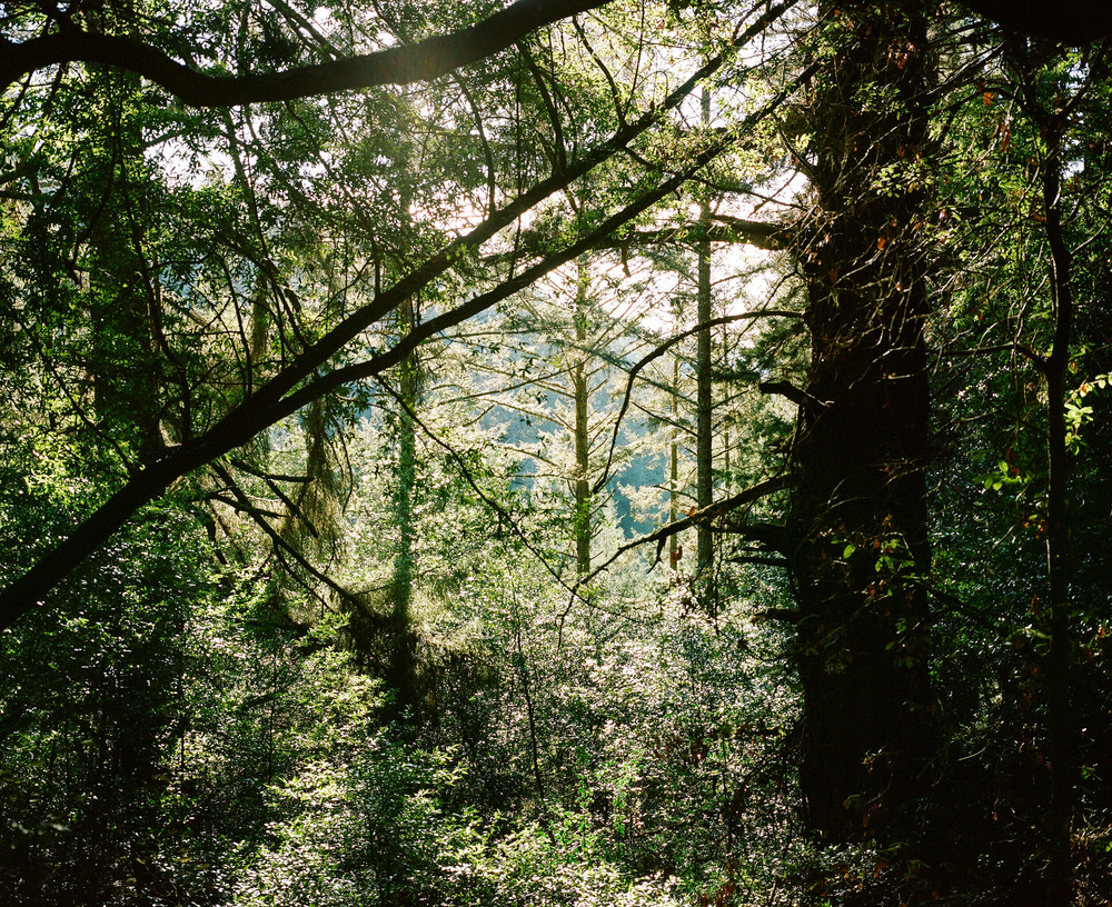 Cristian-Ordonez_Muir-Woods.jpg