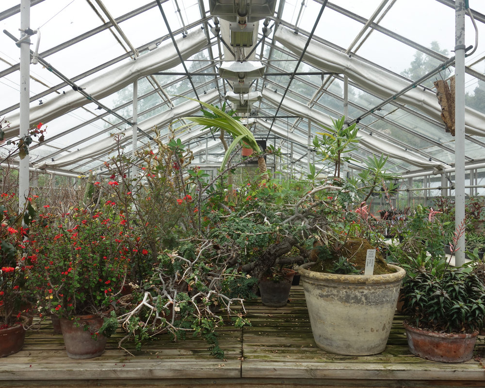From the Land Journal Copenhagen Botanical Gardens