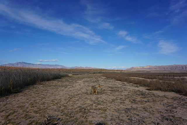 Boulevard of Broken Reeds and Shells