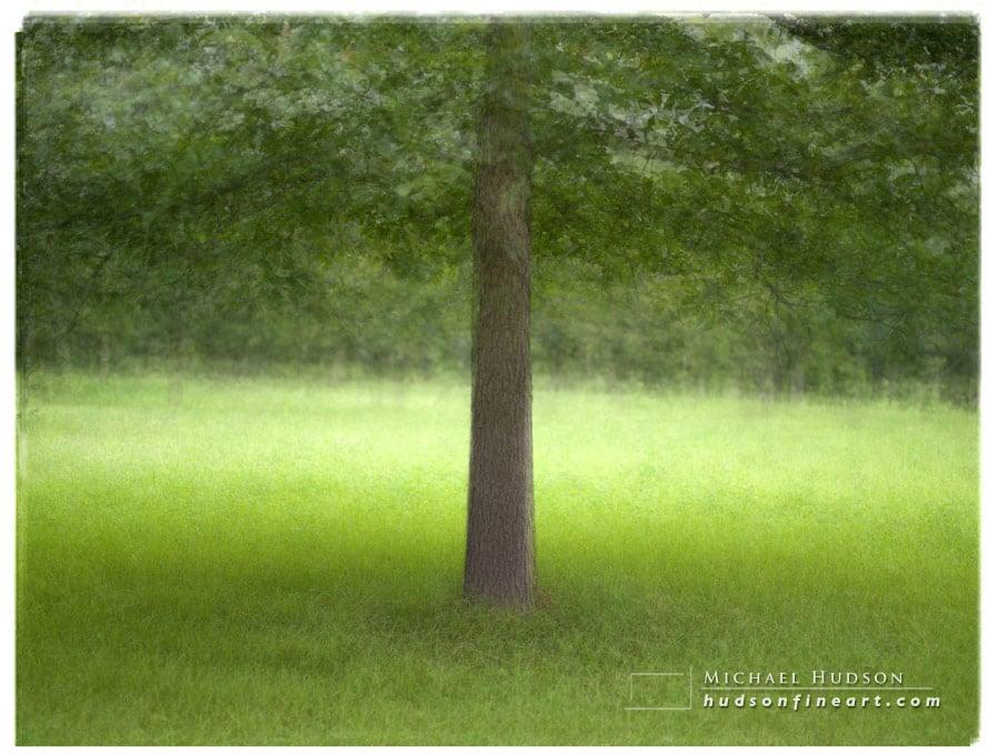 arby-tree-jul2015-4.jpg
