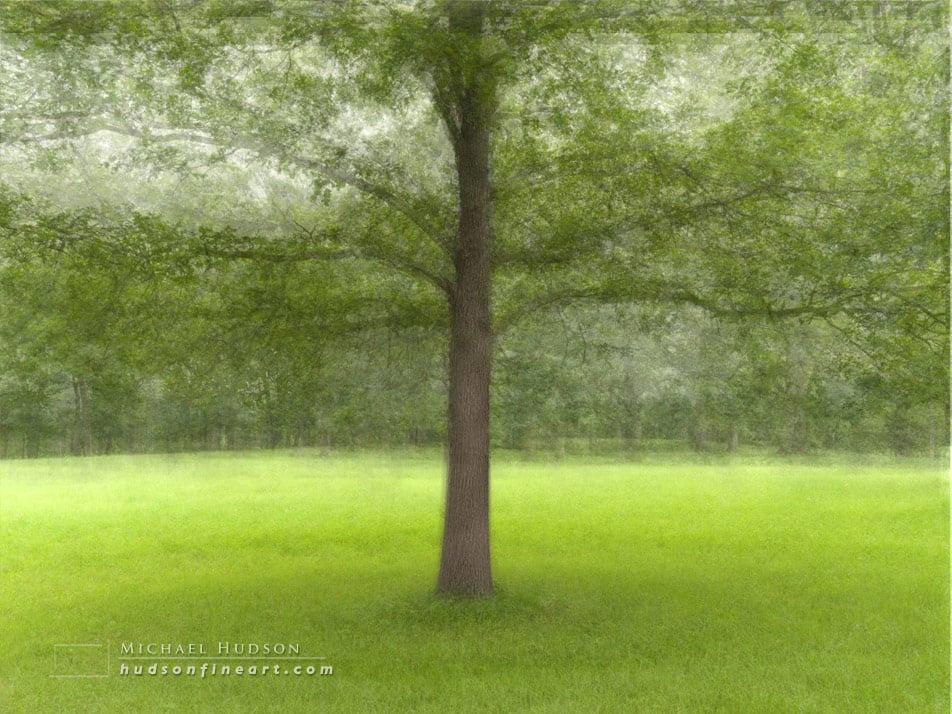 arby-tree-jul2015-2.jpg